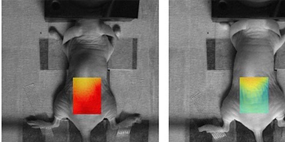 PHOT'Innov-L'intéret d'une caméra EMCCD pour l'imagerie biomédicale